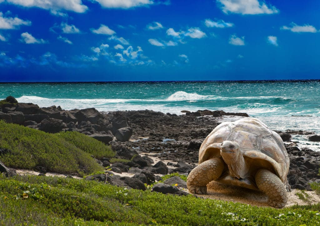 Unique wildlife and breathtaking landscapes are the hallmarks of the Galapagos Islands