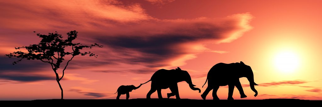 elephants and sunset in South Africa